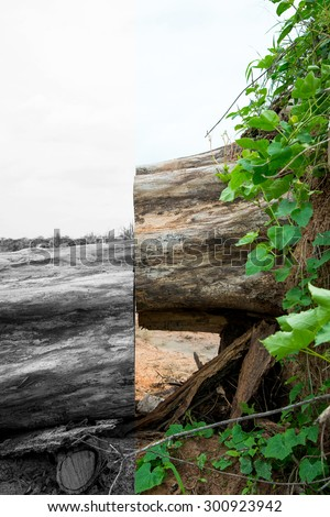 Deforested cut tree wood color and black tone - stock photo