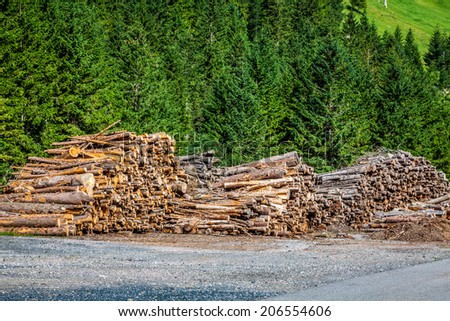 Deforested cut tree wood in forest - stock photo