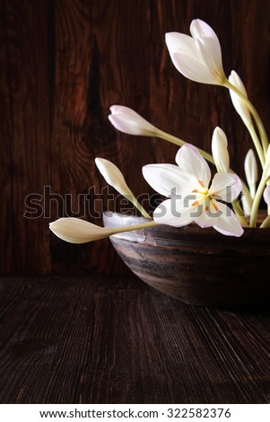 Delicate Autumn Crocus, also known as Naked Lady or Meadow Saffron, blooming in the darkness in a rustic round flowerpot, a seasonal fall or autumn bulb used for medicinal purposes - stock photo