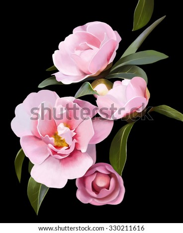 delicate bouquet of pink peony with stem and petals, buds, black background, watercolor illustration - stock photo