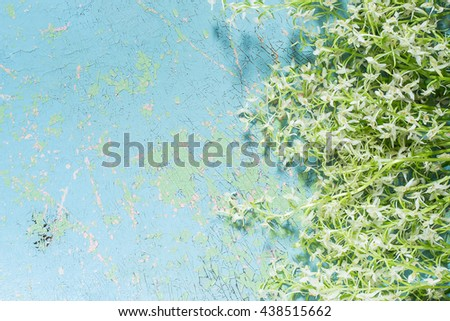 Delicate bouquet of wild orchids, also known as Lesser Butterfly Orchid (Platanthera bifolia) on old cracked blue background - stock photo