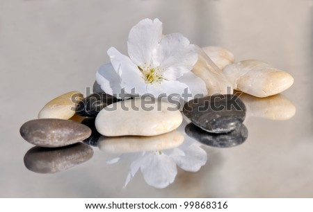delicate cherry blossom on small pebbles reflecting on a mirror