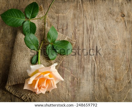 Delicate cream rose on wooden table with sacking - stock photo