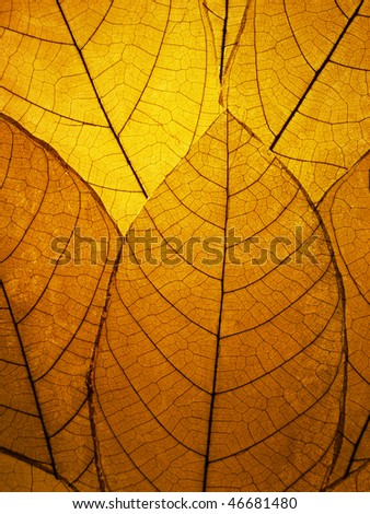 Delicate golden leaves detail - stock photo