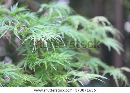 Delicate Leaf Background - stock photo