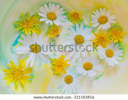 Delicate light background with flowers of camomile and dandelion in water color paints. - stock photo