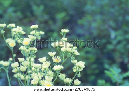 Delicate vintage background with small flowers of chamomile. Special toning in retro style. - stock photo