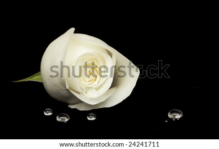 Delicate white rose resting on black velvet surface, water droplets in foreground - stock photo