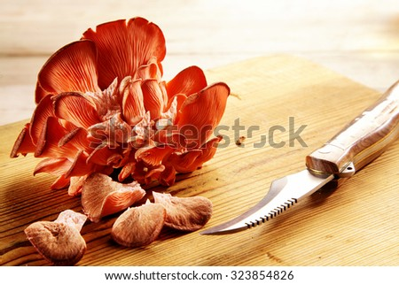 Delicious fresh red oyster mushrooms in a shelf cluster lying on a wooden chopping board with a knife preparing a healthy autumn meal, with copyspace - stock photo