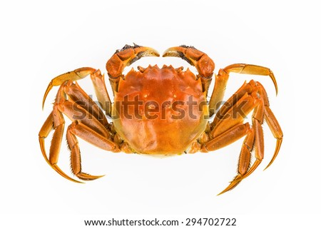 delicious freshwater crab isolated on white background - stock photo