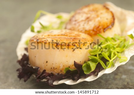 Delicious pan seared sea scallop with lettuce and pea shoots served on a scallop shell - stock photo