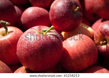 Delicious red gala apples for sale at a farmers market in Reston Virgina. - stock photo