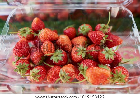 delicious strawberries in a plastic bucket at the market.