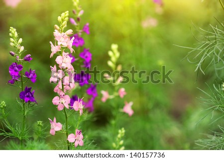 delphinium flower in the garden - stock photo