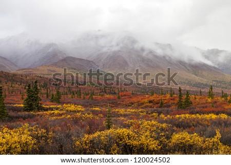 Denali Colors - beautiful autumn colors in Denali National Park, Alaska - stock photo