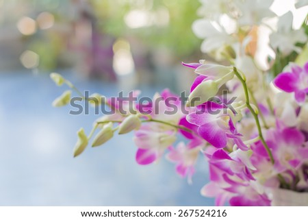 Dendrobium is a huge genus of orchids. - stock photo