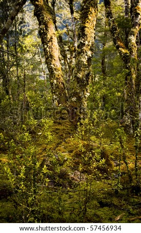 Dense and ancient forests - stock photo