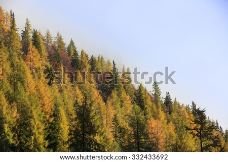 Dense coniferous autumn mountain forest in magical morning light, with dawning sun shining. Seasons changing, weather, low clouds, unique sunlight concept, textured background.