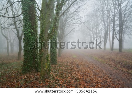 Dense fog at park alley. Early spring moody landscape - stock photo