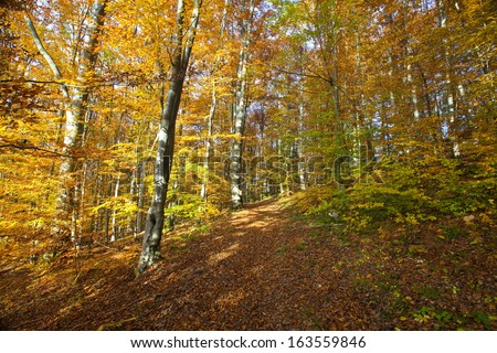 Dense forest, dense forest with morning sunlight shine