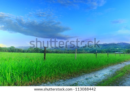Dense grassy field next to dirt road with mountains and blue sky in distance. - stock photo