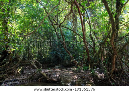Dense jungle with twisted and entangled vines int he Khao Sok national park, Thailand - stock photo