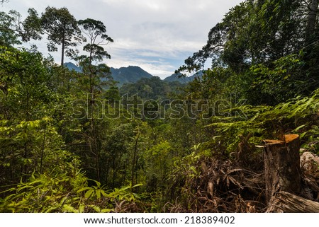 Dense mixed lowland rainforest in Lambir Hills National Park, Borneo, Malaysia. - stock photo