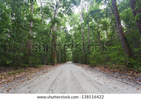 Dense tropical rain forest on Fraser Island - stock photo