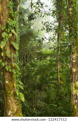 Dense vegetation in Amazonia - stock photo