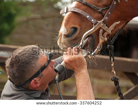 Dental treatment from an equine professional - stock photo