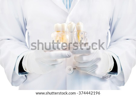 Dentist holding tooth model for patient education isolated in white background - stock photo