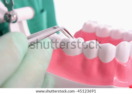 Dentist shows a model for healthy teeth - stock photo