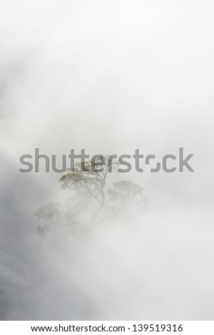 Derbyshire, England, United Kingdom; Bare Tree In A Fog Covered Field - stock photo