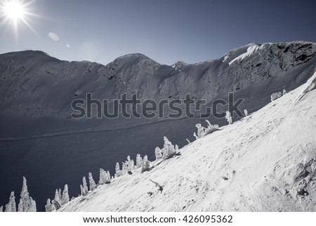 Desaturated high altitude winter skiing resort photo, showing steep slopes and tall peaks, and completely snow covered dwarf pine trees. - stock photo