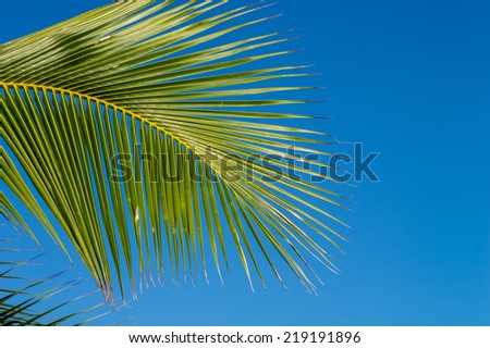 Description:  Early morning light on a palm leaf. Title:  Palm  - stock photo