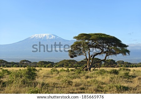 Desert African savannah in Amboseli National Park. Kenya. Africa - stock photo
