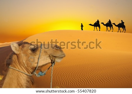 Desert and caravan - stock photo