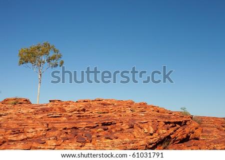 desert and tree - stock photo