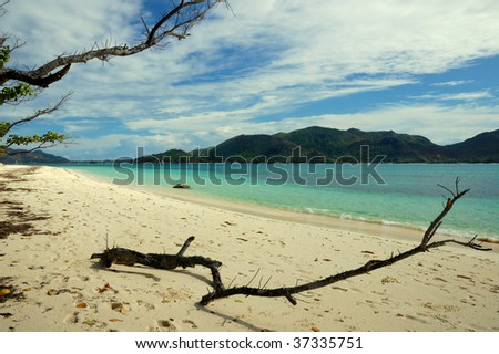 Desert beach and dead branches - stock photo