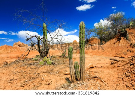 desert, cactus in desert, tatacoa desert, columbia, latin america, clouds and sand, red sand in desert - stock photo