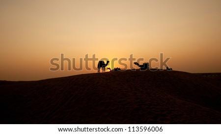 Desert, Camel Ride, Enjoying People - stock photo