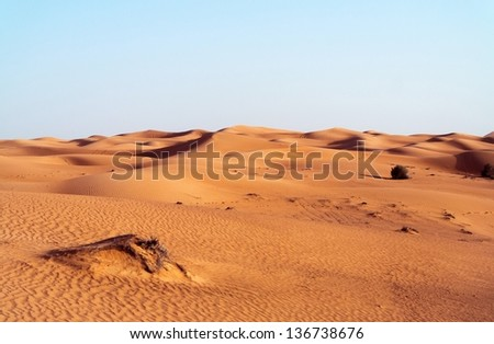 desert dune background on blue sky.Arabian desert near the city of Dubai. part of the hot desert with bushes and clumps - stock photo