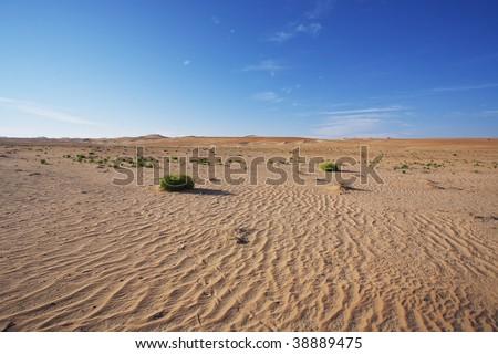 desert in Abu Dhabi - stock photo