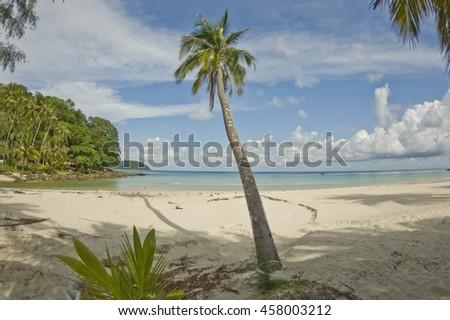 Desert island with palm tree on the beach - stock photo