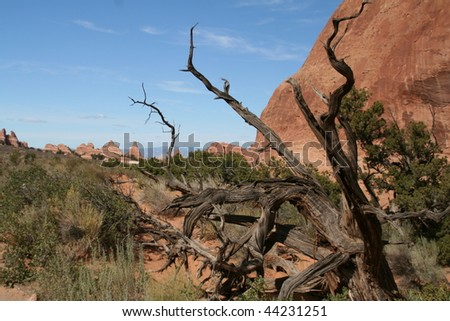 Desert landscape at Arches National Park