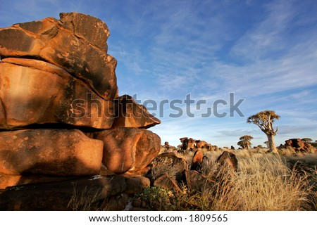 Desert landscape at sunrise with granite rocks and a quiver tree (Aloe dichotoma), Namibia
