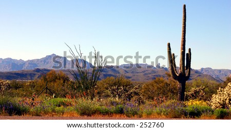 Desert landscape near Phoenix Arizona - stock photo