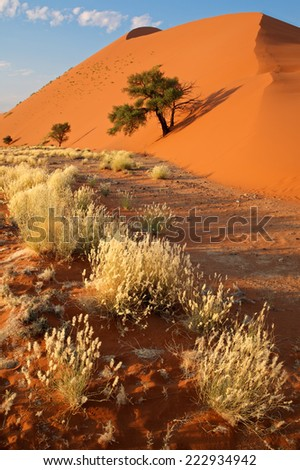 Desert landscape with grasses and a red sand dune, Sossusvlei, Namibia - stock photo