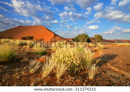 Desert landscape with grasses and red sand dunes, Sossusvlei, Namibia - stock photo