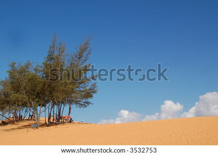 desert landscape with trees